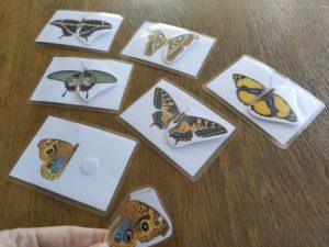priraďovanie motýle